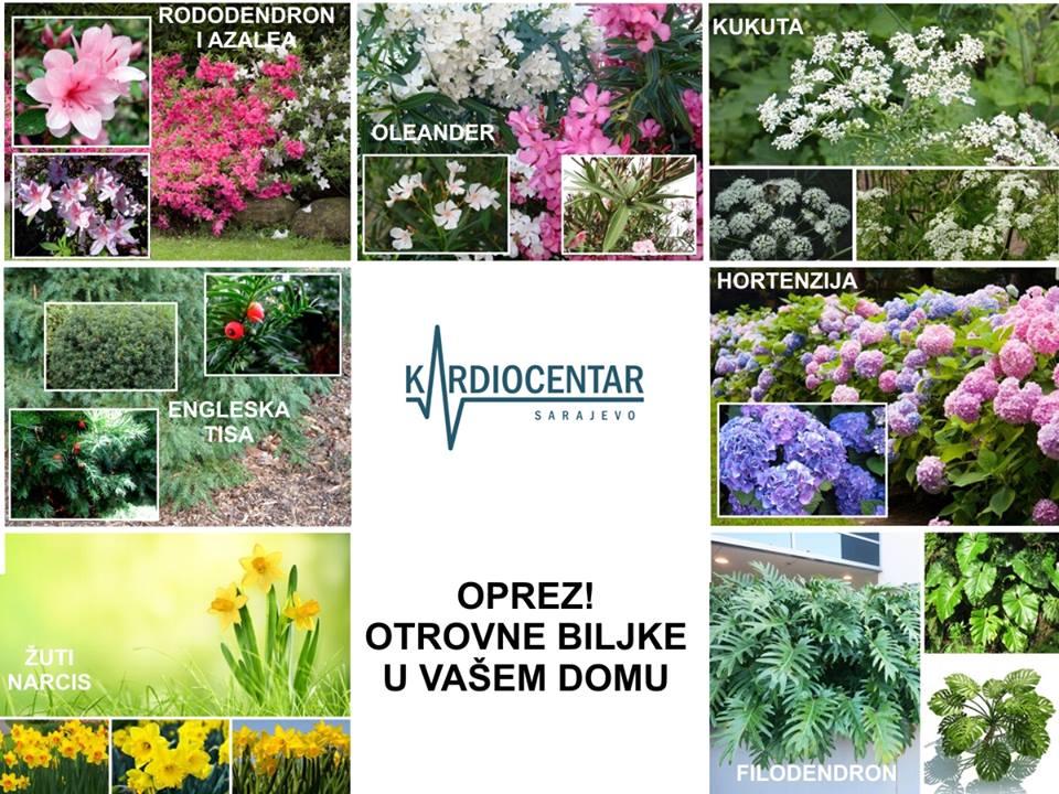 7 otrovnih biljaka koje možda imate kod kuće