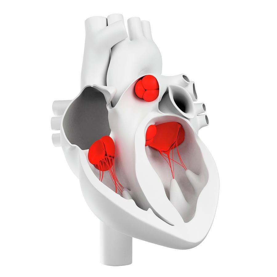 srčani zalisci